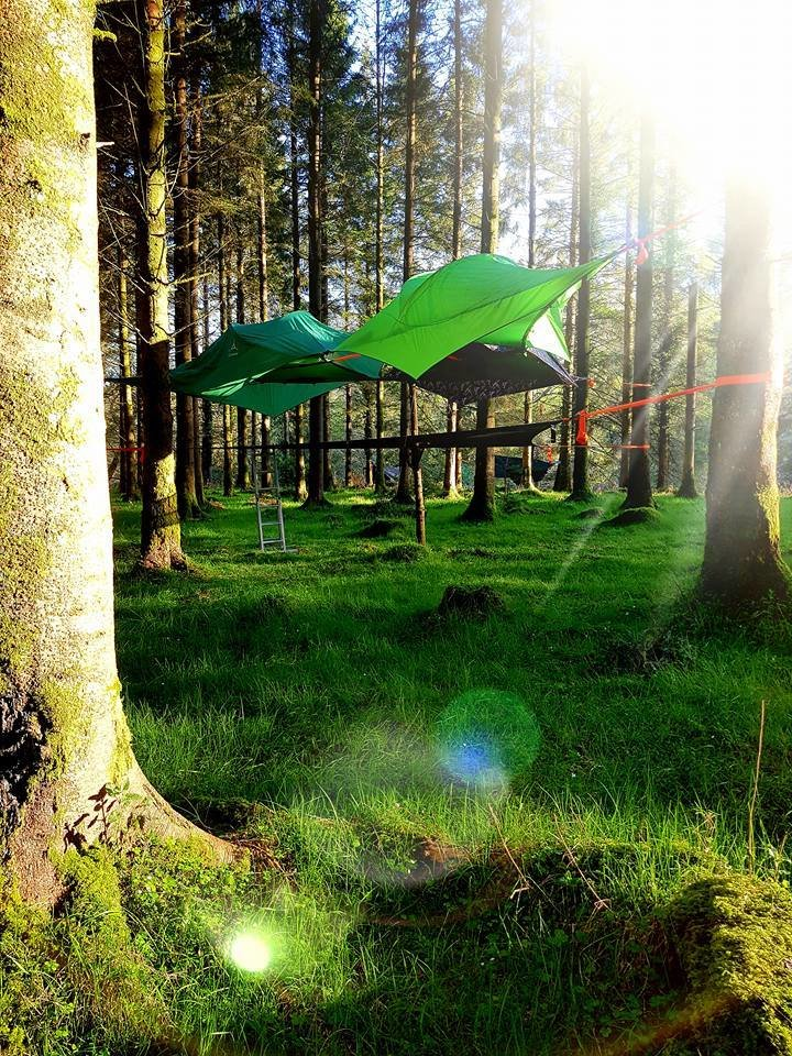 Tree Tent Camping Gift Certificate