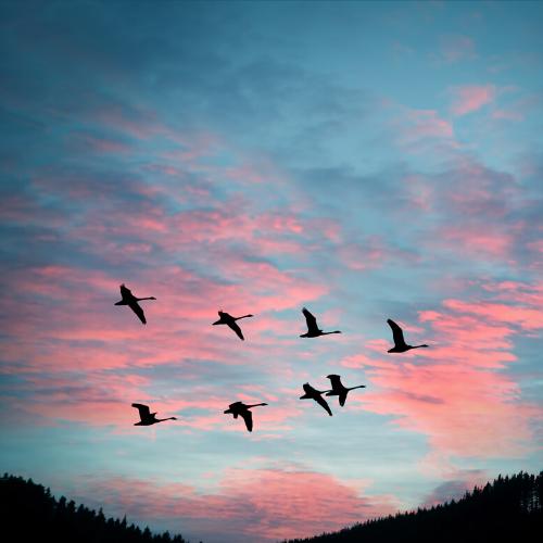 Calm the flock down!