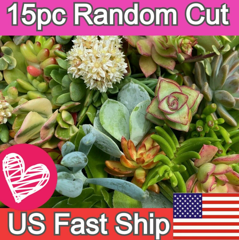 Succulent 15 Varieties Random pick