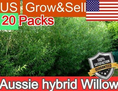Aussie Hybrid Willow Salix