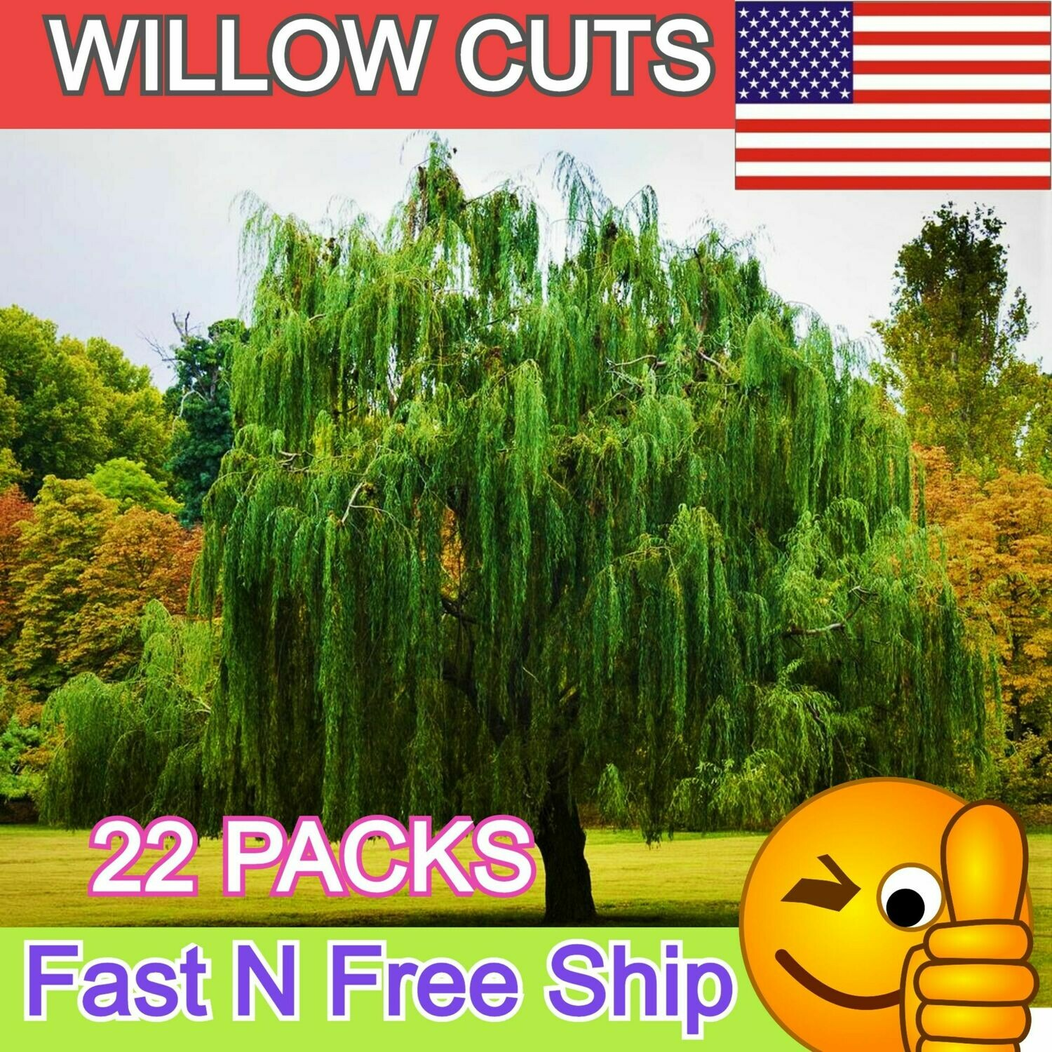 Weeping Hybrid Willow Tree Cut