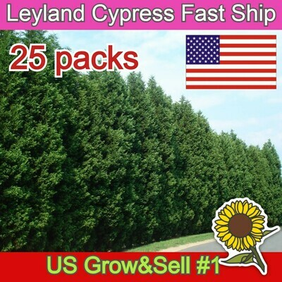 Leyland Cypress fast growing evergreen