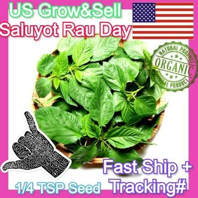 Saluyot Molokhia Egyptian Spinach Hat rau day