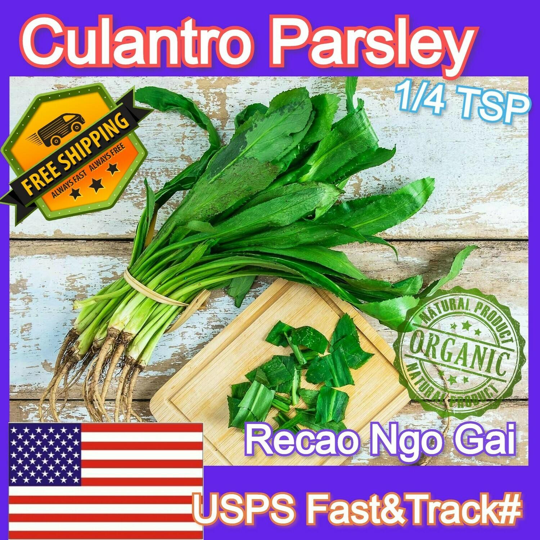 Culantro Parsley Ngo Gai 1/4 tsp seeds
