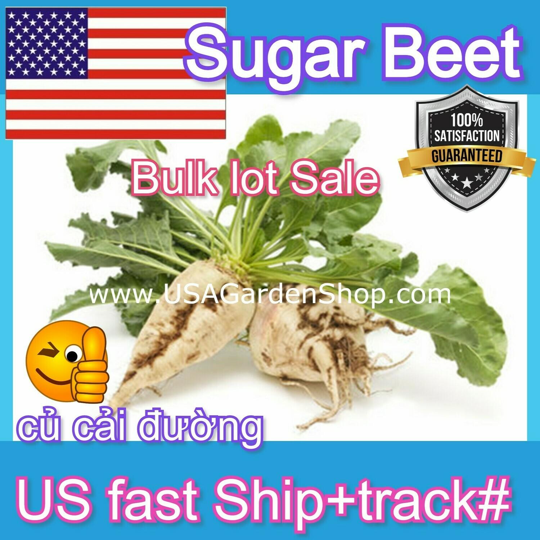 Sugar Beet Seeds Củ cải đường
