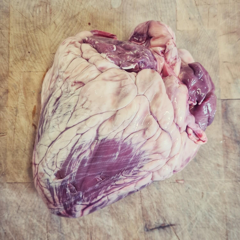 Ox Heart