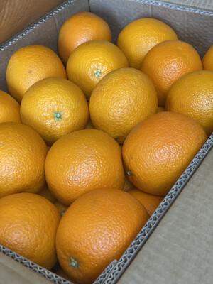 Orange x4