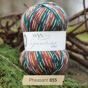 WYS 4ply - Pheasant