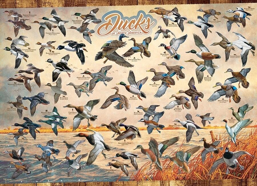 Ducks of North America - 1000 Piece Cobble Hill Puzzle