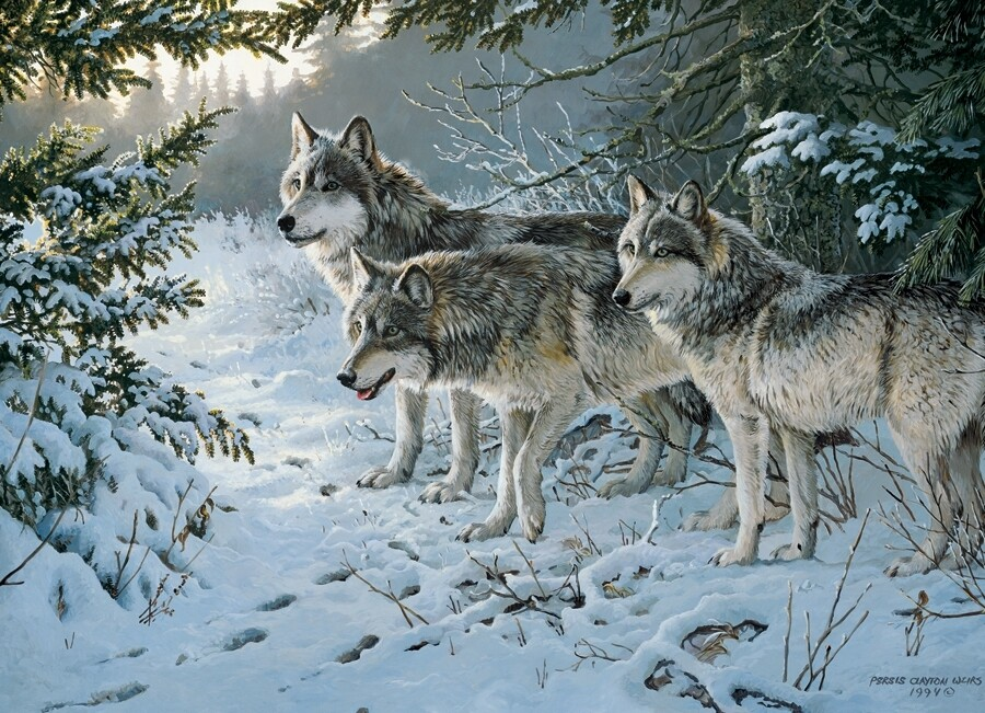 Wolf Trail - 1000 Piece Cobble Hill Puzzle