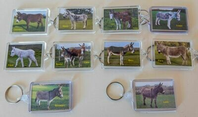 PHOTO KEYRING (Adoption donkeys)