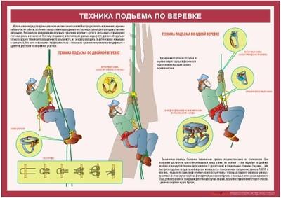 Учебный плакат Техника обрезки деревьев (кронирование)