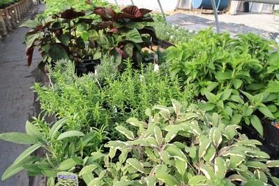 Herbs and Herbs!