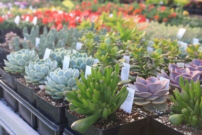 Succulents for New Summer Style