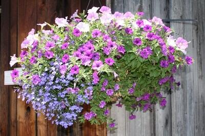 Favorite Hanging Baskets