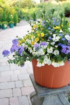 Beautiful, Already-Planted Patio Pots