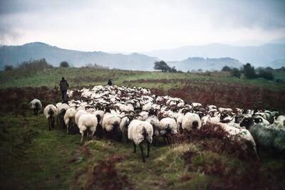 Toile de laine