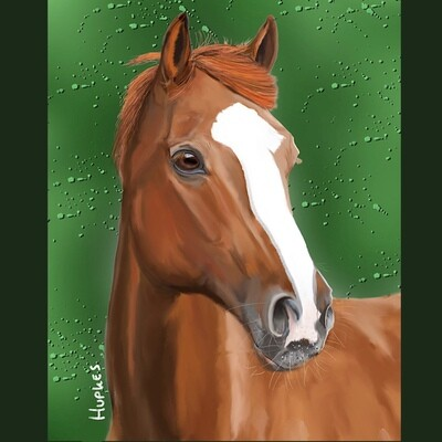 Realistic Portret of Your Pet on canvas (50 x 50 cm)