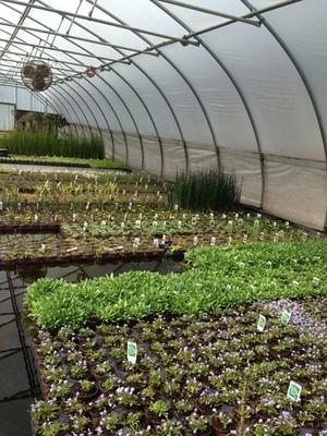 Plant assortment for Rectangle Coir Wetland