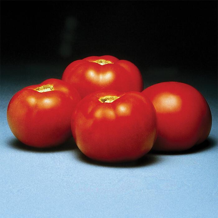 Better Bush Hybrid Tomato