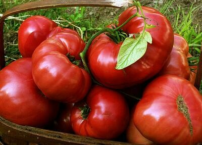 Brandywine (Sudduth Strain) Tomato
