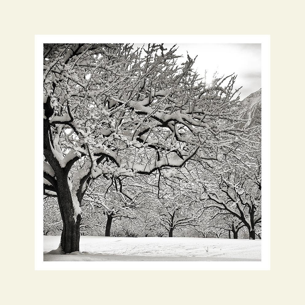 Trees at dawn #3