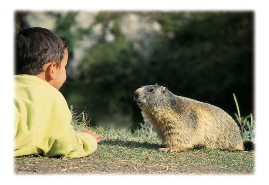 Bimbo&Marmotta