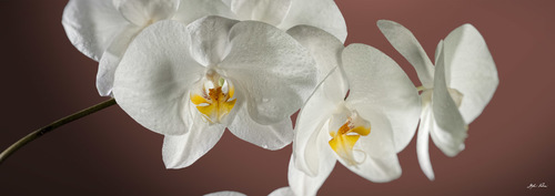 Orchidea per arredo, stampa su canvas TOP QUALITY