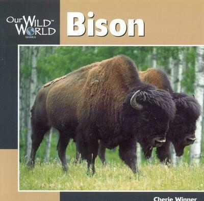 Our Wild World: Bison