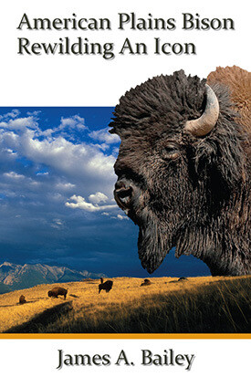 American Plains Bison: Rewilding An Icon