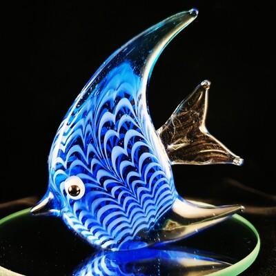 Small Blue Angelfish*