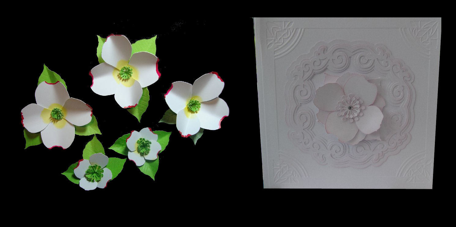 Dogwood  3d flower. . Create your own stunning flowers -SVG format