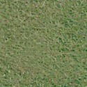 National Nonwoven 100% Wool Felt -- Sea Grass