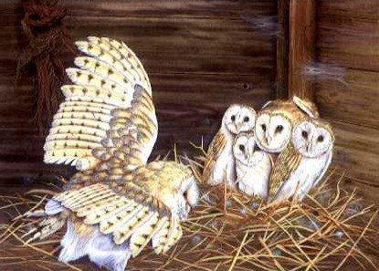 Barn Owl and Young
