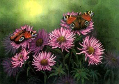 Peacock Butterflies and Daisies