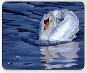 Mute Swan and Reflection. Placemat