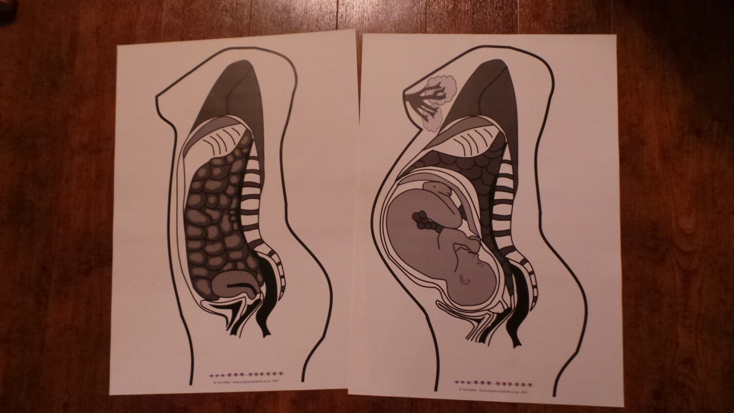 Cross-sections of pre-pregnancy and term pregnant female body poster set A2 or A3
