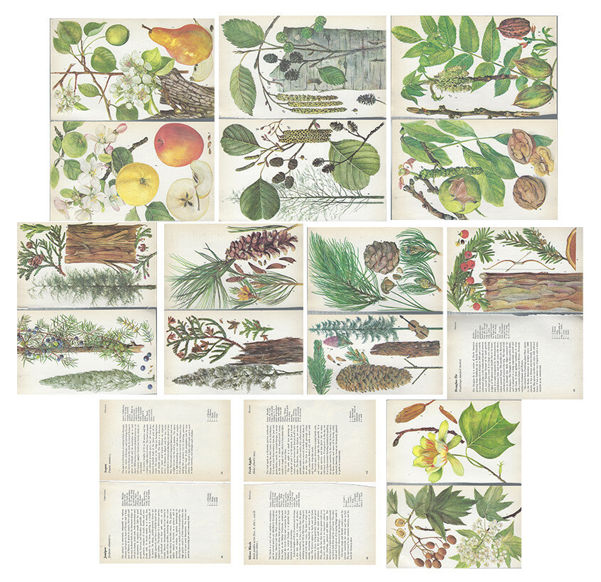 Vintage Guide to trees collage pak Instant download