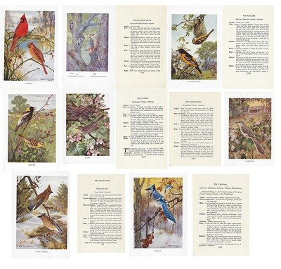Vintage Land bird book ***PRINTED VERSION*** 14 pages
