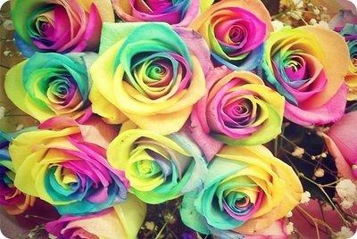 Радужные розы из Голландии