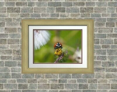 Gold or Silver Frame 12x10 inch with 5 border colour options.