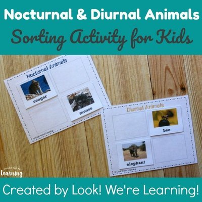 Nocturnal and Diurnal Animals Sorting Activity