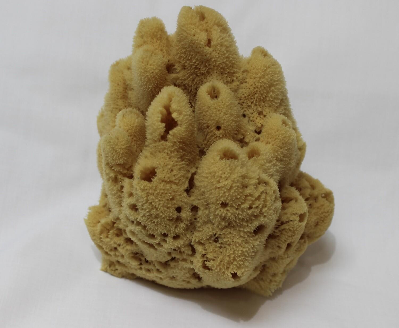 Decorative Yellow Sponge