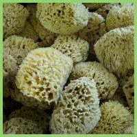 Wool Bathing Sponge