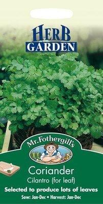 Coriander Cilantro for Leaf Seeds