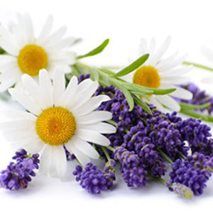 Lavender and Chamomile HE1009