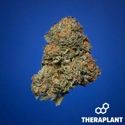 Ghanica T19 9317 - 3.5g Flower (Theraplant)