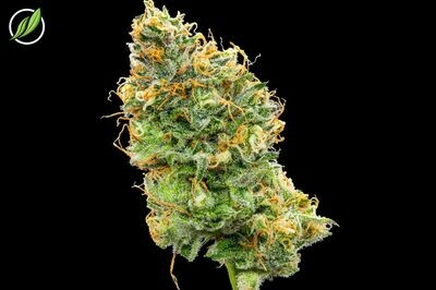 Purpalex Flower T29% I 9090 - 3.5g (CTPharma)