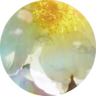 Вебинар Провидицы Альмин «Сновидение Бесконечности»