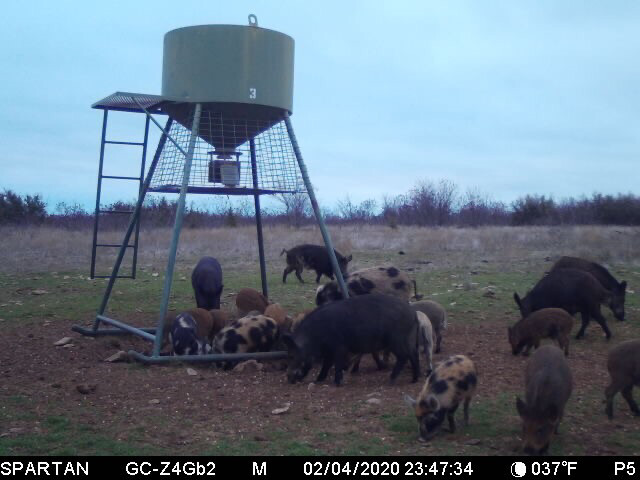 Affordable Hog Hunting and Fishing with Lodging only $150 Per Person Per Day